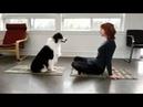 Эта собака - лучший йога-партнер.This dog is the best yoga partner.