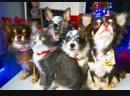 Наша дружная семейка блогеров Magic Pets