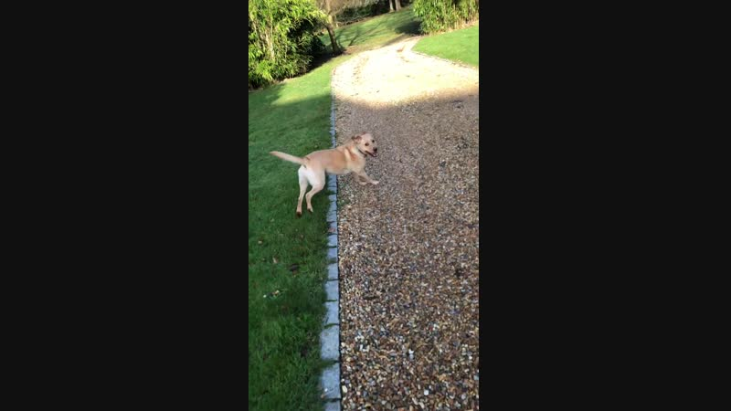 This was my dog when she realised that we were going for a walk. It made me smile when I wasnt feeling great so I thought Id s