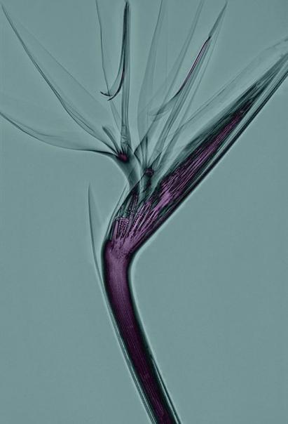 Фото растений, созданных с помощью рентгеновского излучения