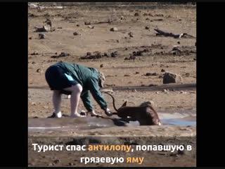 Турист спас антилопу, попавшую в грязевую яму