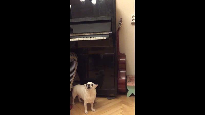 Люся певица