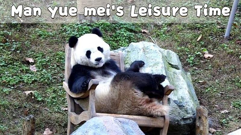Man Yuemei's Leisure Time iPanda