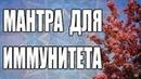 Мантра для улучшения иммунитета. Андрей Дуйко школа Кайлас