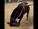 классно танцует лошадки