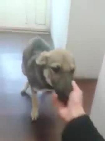 Собака, над которой всю жизнь издевались, теперь счастлива и радуется жизни