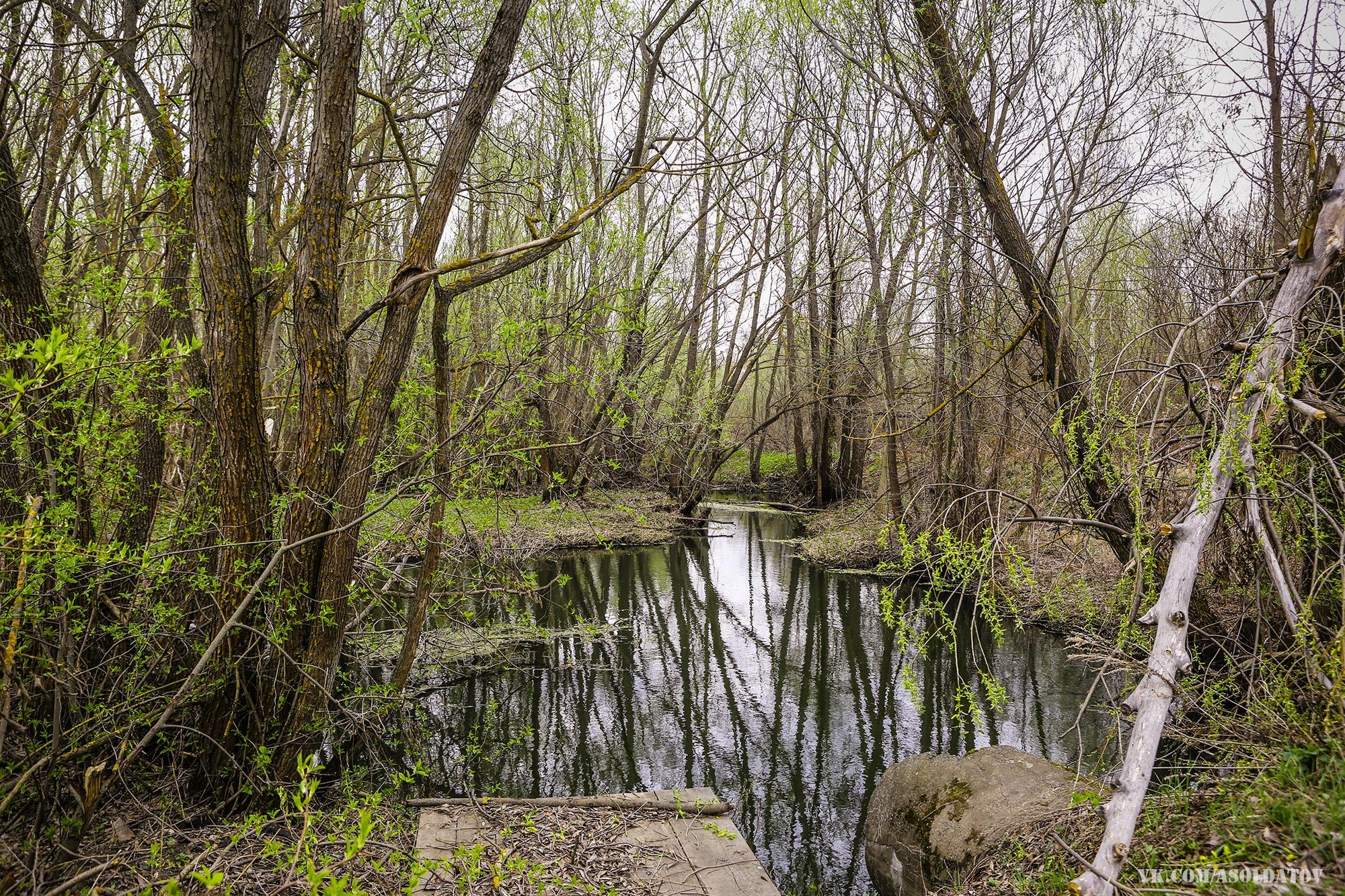 Река в Литомгино