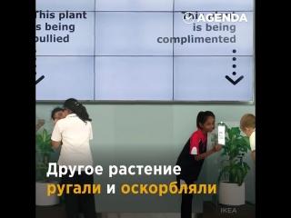 Вот что будет, если одно растение хвалить, а другое ругать