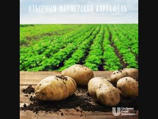 Новые картофельные хлопья Knorr