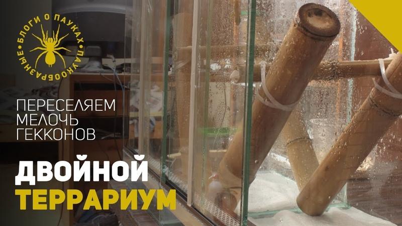 Новый террариум для подрастающих гекконов(перезалив)