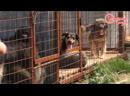 Поездка в приют для бездомных животных Добрый дом