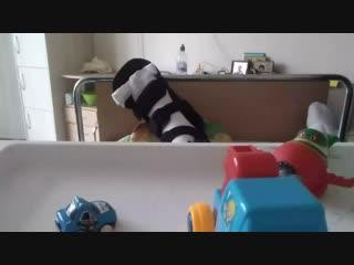 веселые бибики ( для малышей)