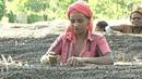 Падение цен на кофе: фермеры зарабатывают менее цента за чашку
