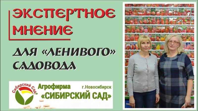 Сибирский сад. Сорта томатов, перца, баклажанов для «ленивого» садовода