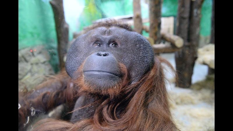 Захар Асоян прибыл в зоопарк Е-бурга