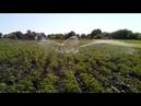 Мотопомпа Forte FP 20HP Полив огорода большого охвата
