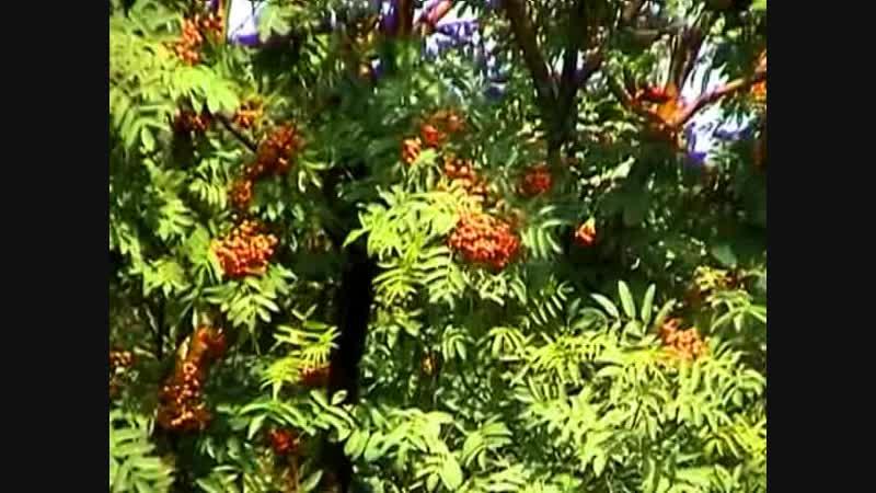 семейства двудольных растений