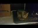 М- котята ( видео 1)