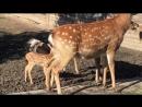Олени в челябинском зоопарке