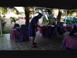Обезьяны в ресторане отеля Baobab Holiday Resort - Гамбия