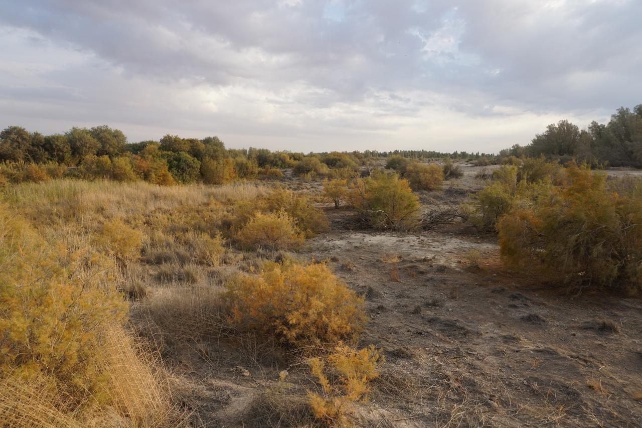 Азрак - самый большой оазис Аравийской пустыни
