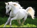 Белая лошадка, ч.1. White hors, р.1. Amigurumi. Crochet. Амигуруми. Игрушки крючком.