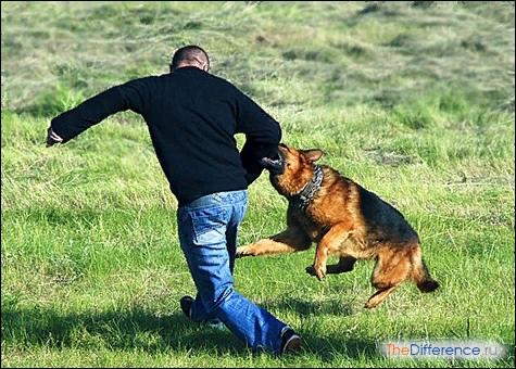 Какое зрение у собак