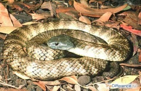 Самая опасная змея в мире