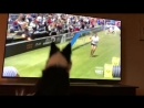 Kirk, a female Border Collie, watching herself win the 2017 Purina Pro Challenge.