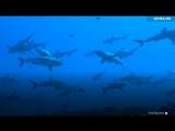 Акулий рай