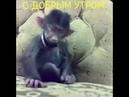 Смешная обезьяна с добрым утром