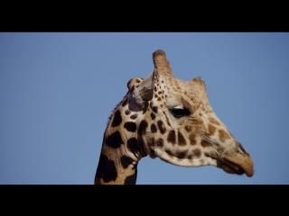 Animals_09___4K_res