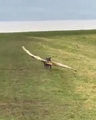 And carry a big stick · #coub, #коуб