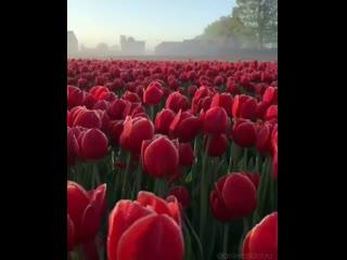С добрым утром, наши милые, нежные, любимые и самые красивые!