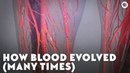 How Blood Evolved Many Times