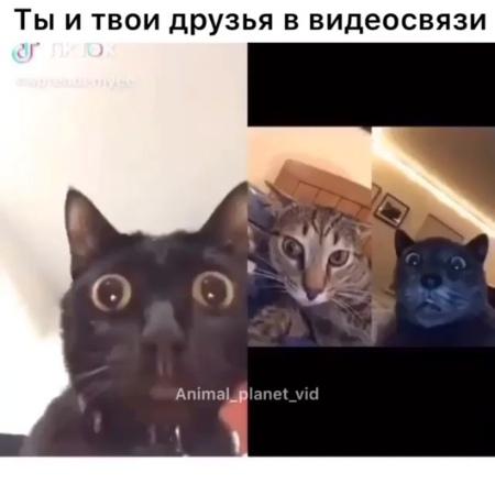 Когда созвонился с друзьями по видеосвязи
