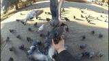 Почти ручные голуби у нас на Соколе.