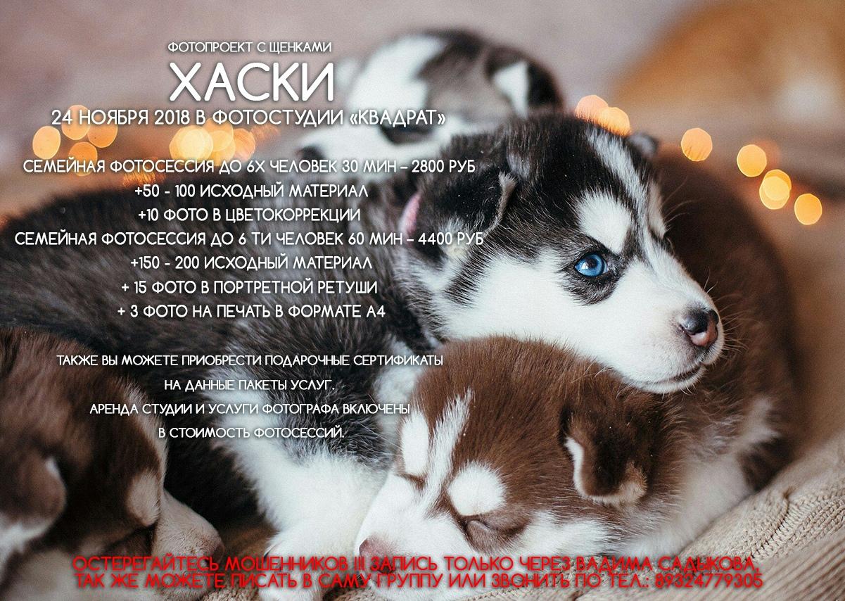 Афиша Тюмень Фотопроект с щенками Хаски