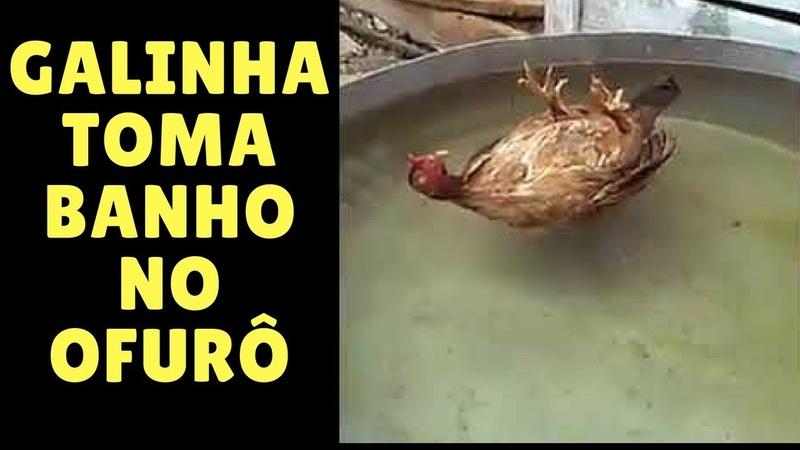 Galinha toma banho no seu ofurô
