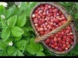 Сладка ягода в лес поманит - Поёт Юлия Боголепова