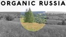 35000 DEAD villages in Russia with ripe food forests