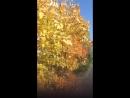 Осенний денек👋💛💛💚💛💚💛💚💛💚💛