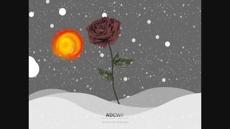 Sun Rose ☀️🌹