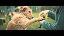 Dogs Trust TV Ad specialsomeone long version