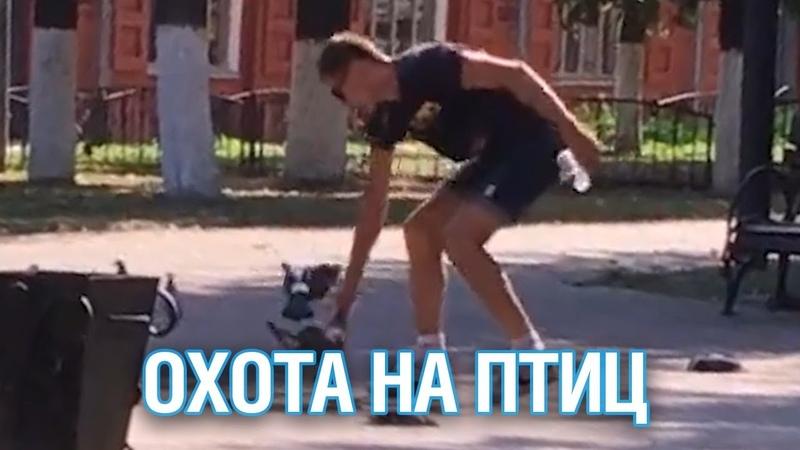 Хулиган забил до смерти голубей в Клину - Подмосковье 2018 г.