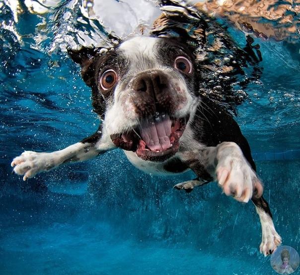 Собаки под водой.