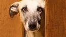 Привезённый из приюта пёс не спал и не отходил от двери спальни хозяев даже ночью. А причина была...