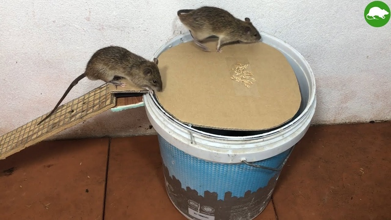 PVC Water Bottle Mouse Trap DIY make A Mouse Trap Homemade Mouse Reject Idea Mouse Trap