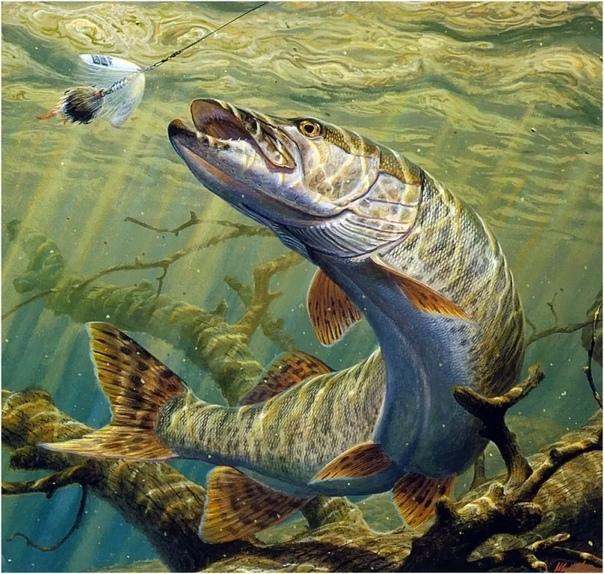 Какая бывает рыба Речные и морские рыбы