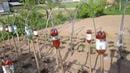 Для сада и огорода почти бесплатный парник
